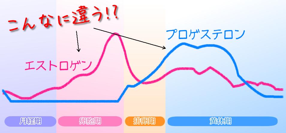 月経周期表、生理周期表